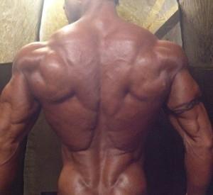 Rücken Shredded
