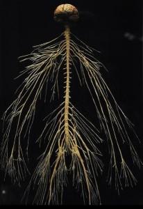 zentrales-nervensystem