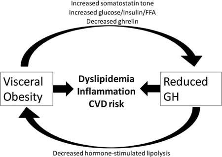 Der sich selbst immer wieder neu erzwingende Kreislauf in Bezug auf einen hohen Anteil an viszeralem Fett und einen reduzierten Wachstumshormonspiegel (Stanley 2014).