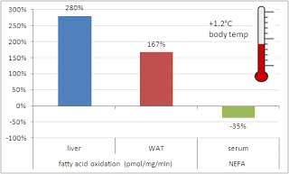 Relative Zunahme der Fettoxidation und Abnahme von nicht-veresterten Fettsäuren in wilden Mäusen und Mäusen ohne Myostatin nach 12 Wochen HFD bzw. mit normalem Futter.