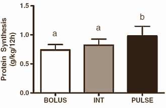protein-alle-3-stunden-optimal-fuer-den-muskelaufbau-grafik1