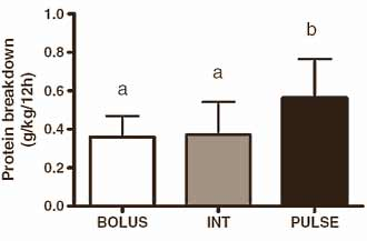 protein-alle-3-stunden-optimal-fuer-den-muskelaufbau-grafik2