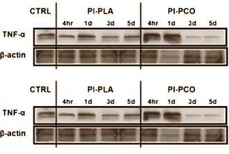 traubenkernextrakt-beschleunigt-erholung-von-muskelgewebe-grafik1