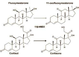 fluoxymesteron-ein-cortisol-booster-cortisol