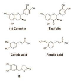 kieferrinden-extrakt-pycnogenol-gegen-muskelkraempfe-molekuele