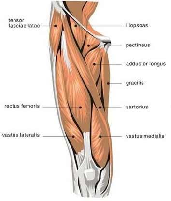wie-man-die-beinpresse-verletzungsfrei-ausfuehrt-muskeln