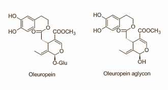 fettfrei-durch-oliven-oleuropin