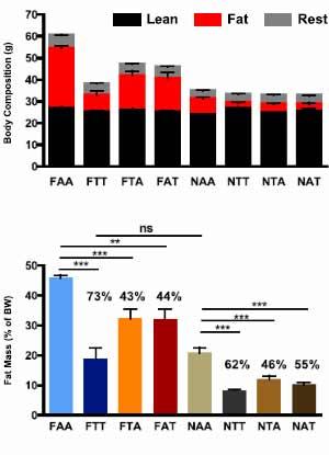 muskelaufbau durch intermittent fasting grafik1 - Muskelaufbau Ernahrungsplan Beispiel