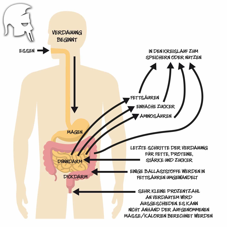 Grundlegende Physiologie: Was sind Kalorien, wie entstehen