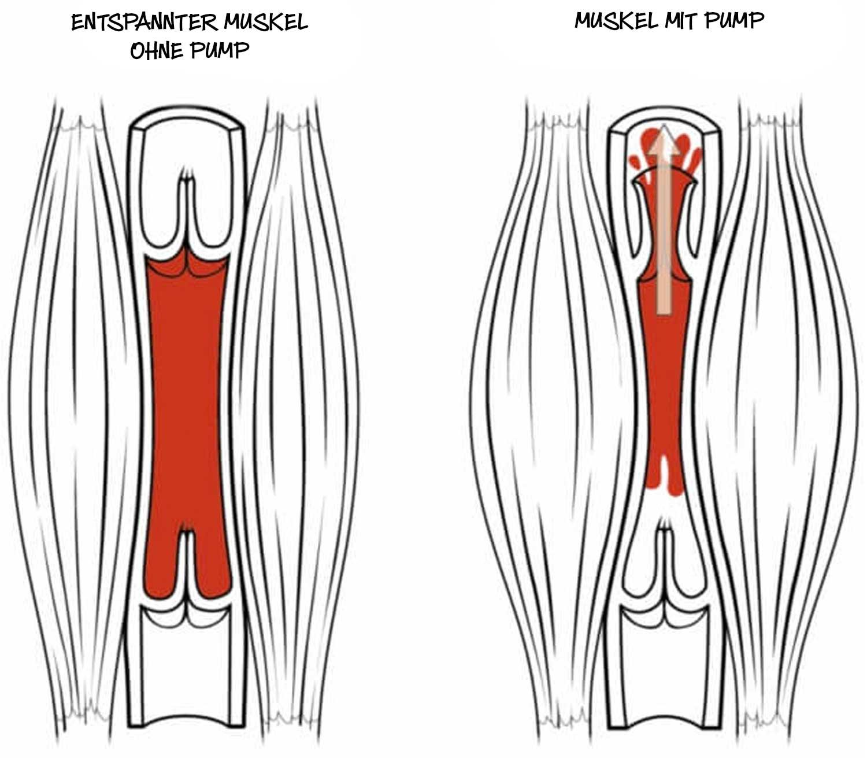 Pump Muskelaufbau