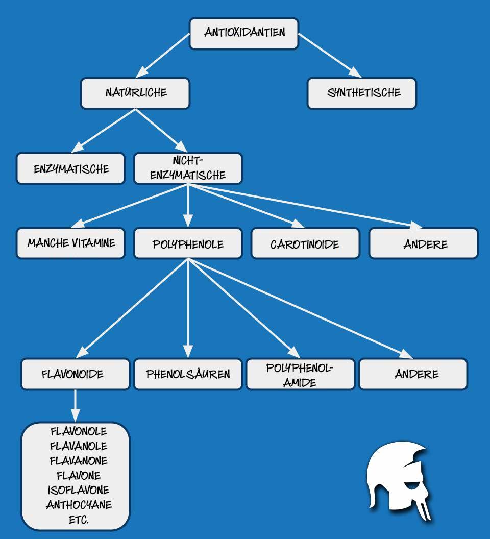 Antioxidantien Muskelaufbau