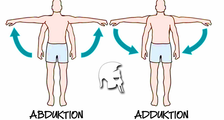 Adduktion und Abduktion der Schulter