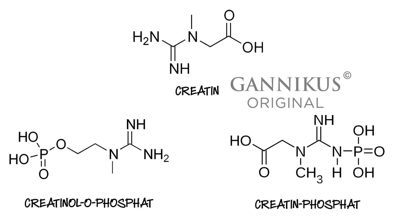 Creatinol-o-Phosphat Creatin