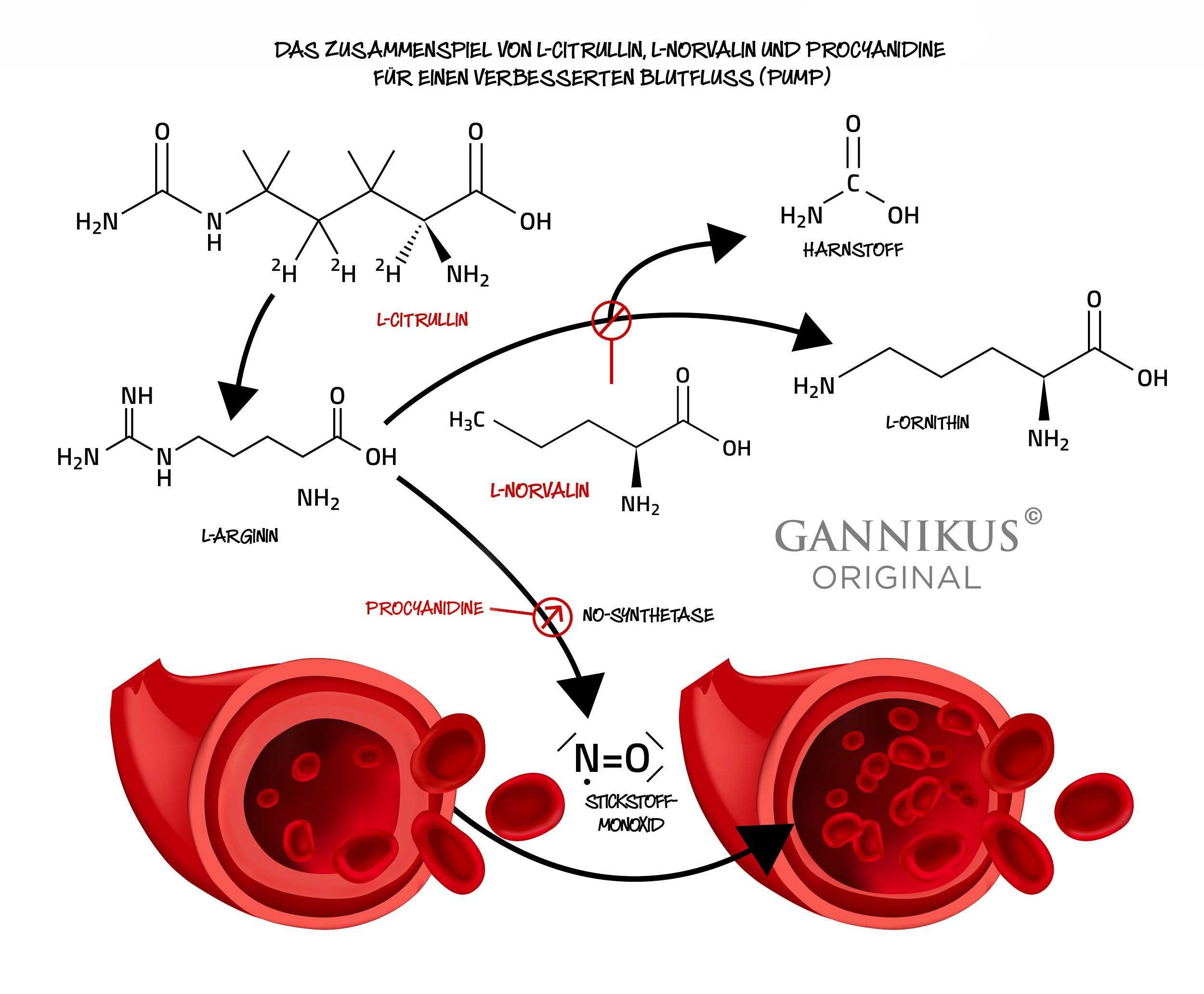 Citrullin Arginin Norvalin Stickstoffmonoxid