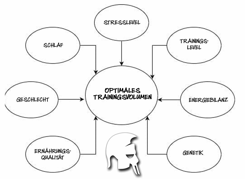 Optimales Trainingsvolumen