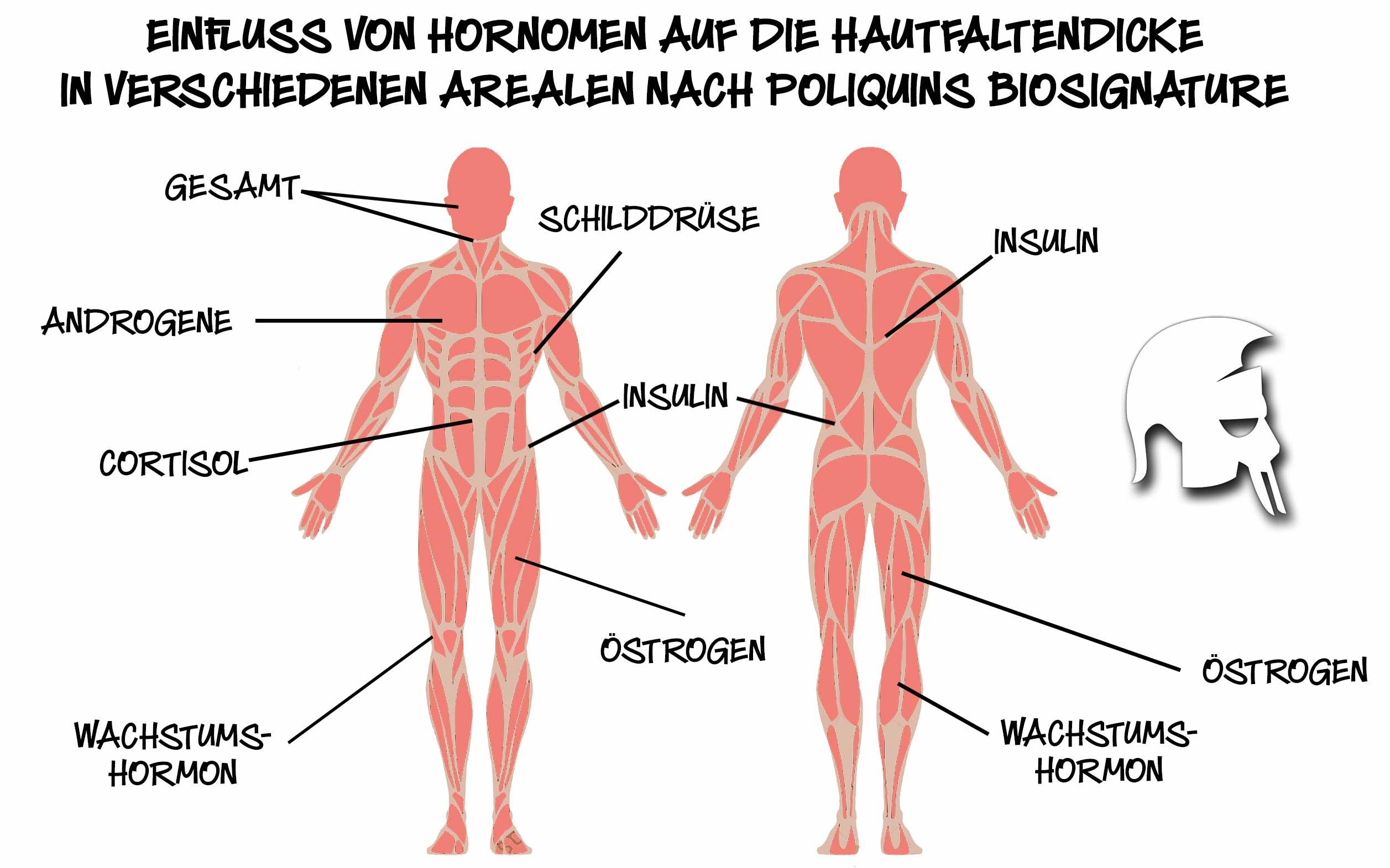 Körperfettverteilung Hormone