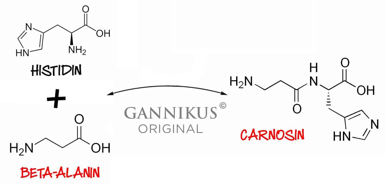 Beta-Alanin Carnosin