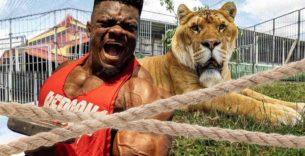 Titelbild: Blessing Awodibu im Kräftemessen gegen 360 Kilo schweren Liger