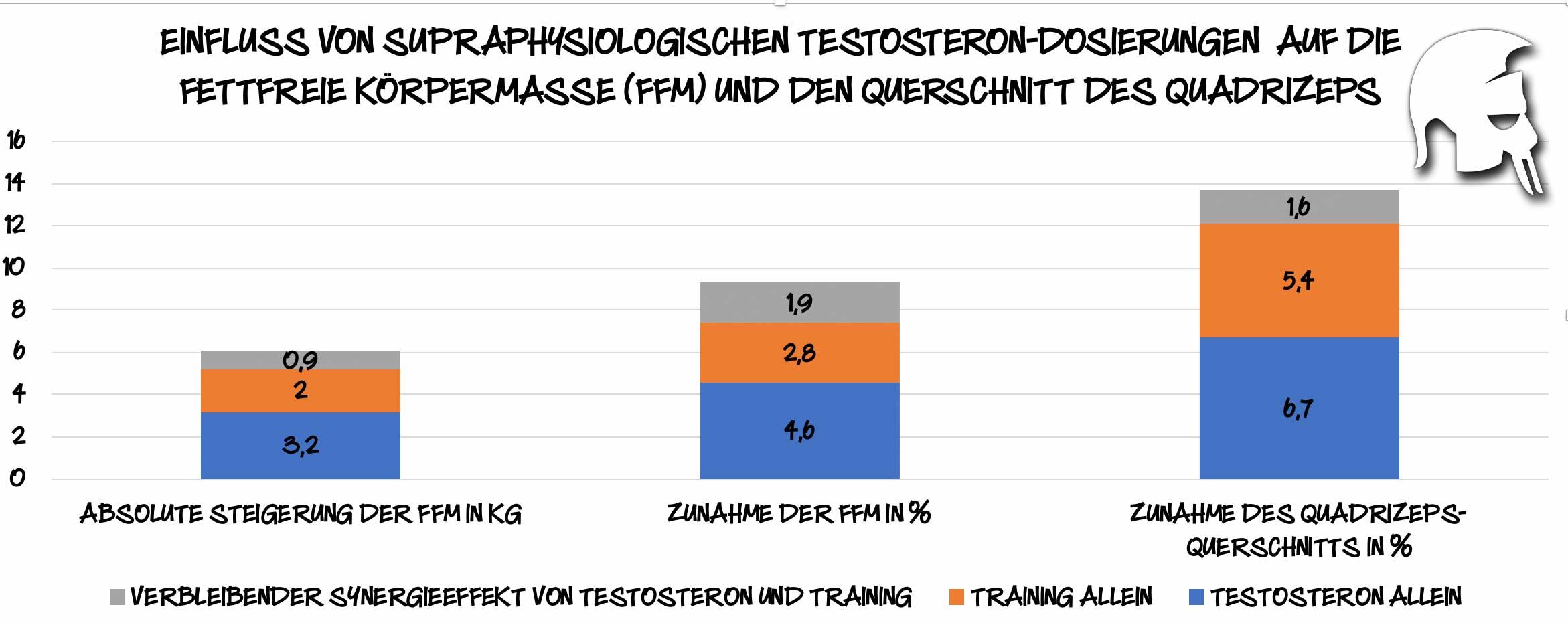 Testosteronspiegel Muskelaufbau