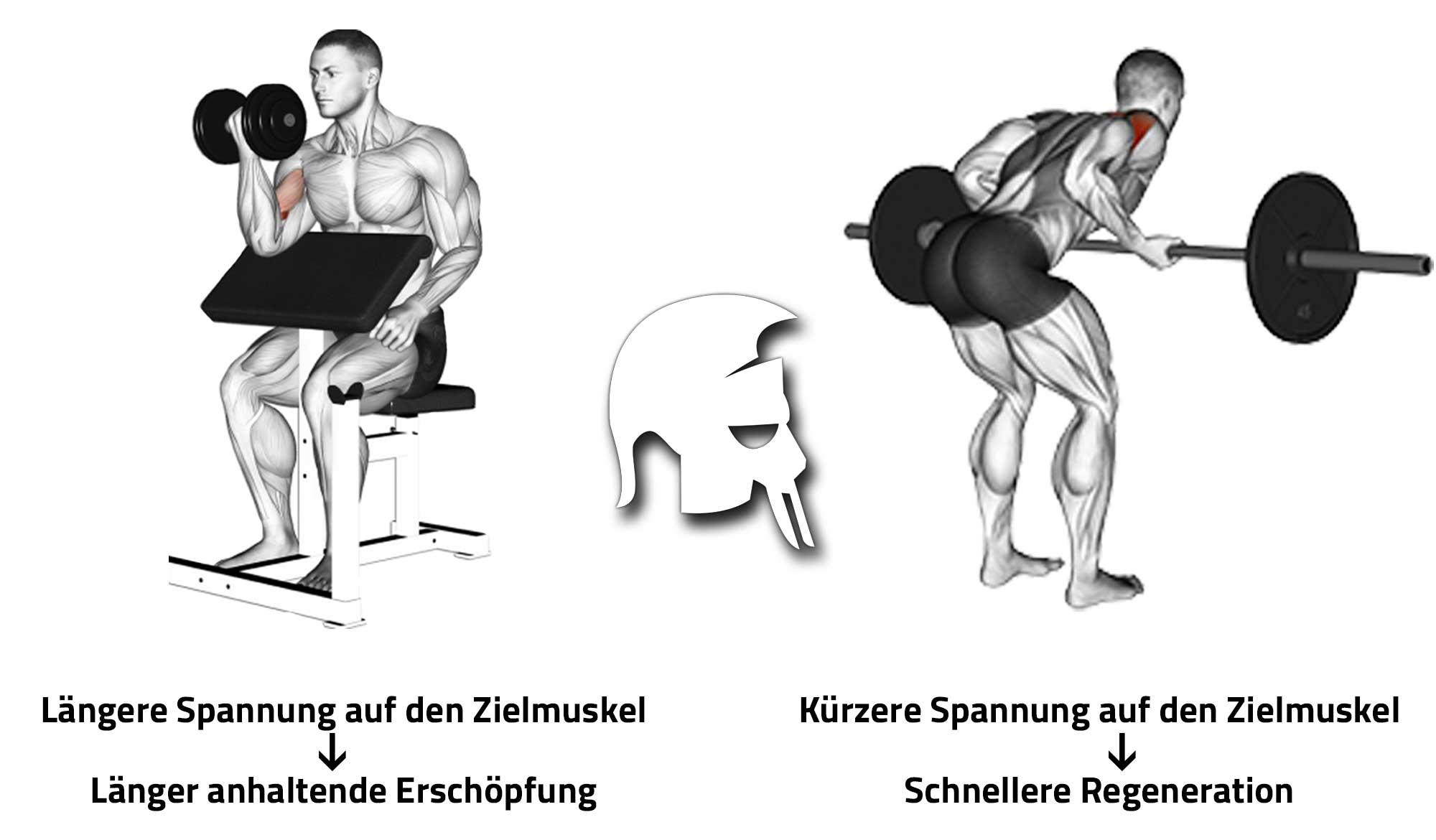 Training Muskelaufbau Übungsauswahl