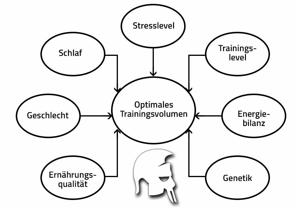 Training Muskelaufbau Volumen