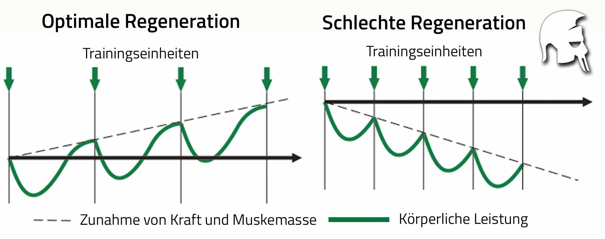 Regeneration Muskelaufbau