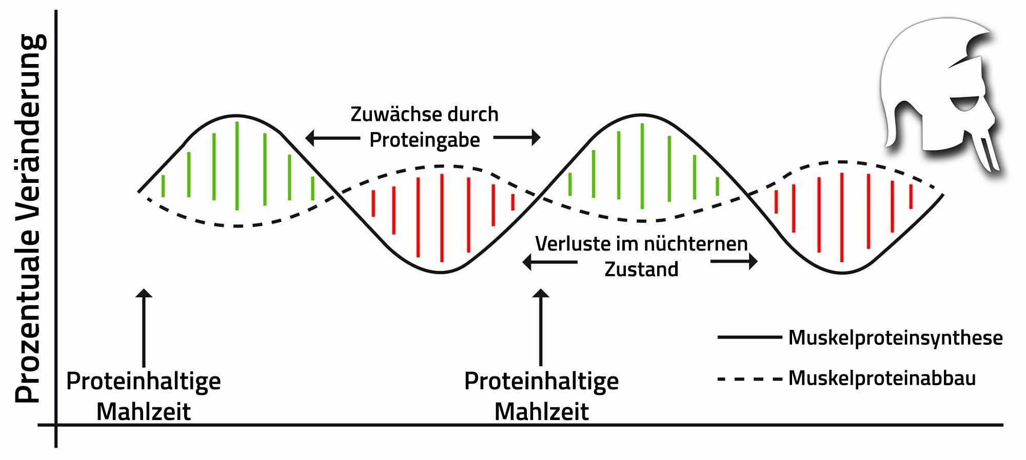 Proteinbalance