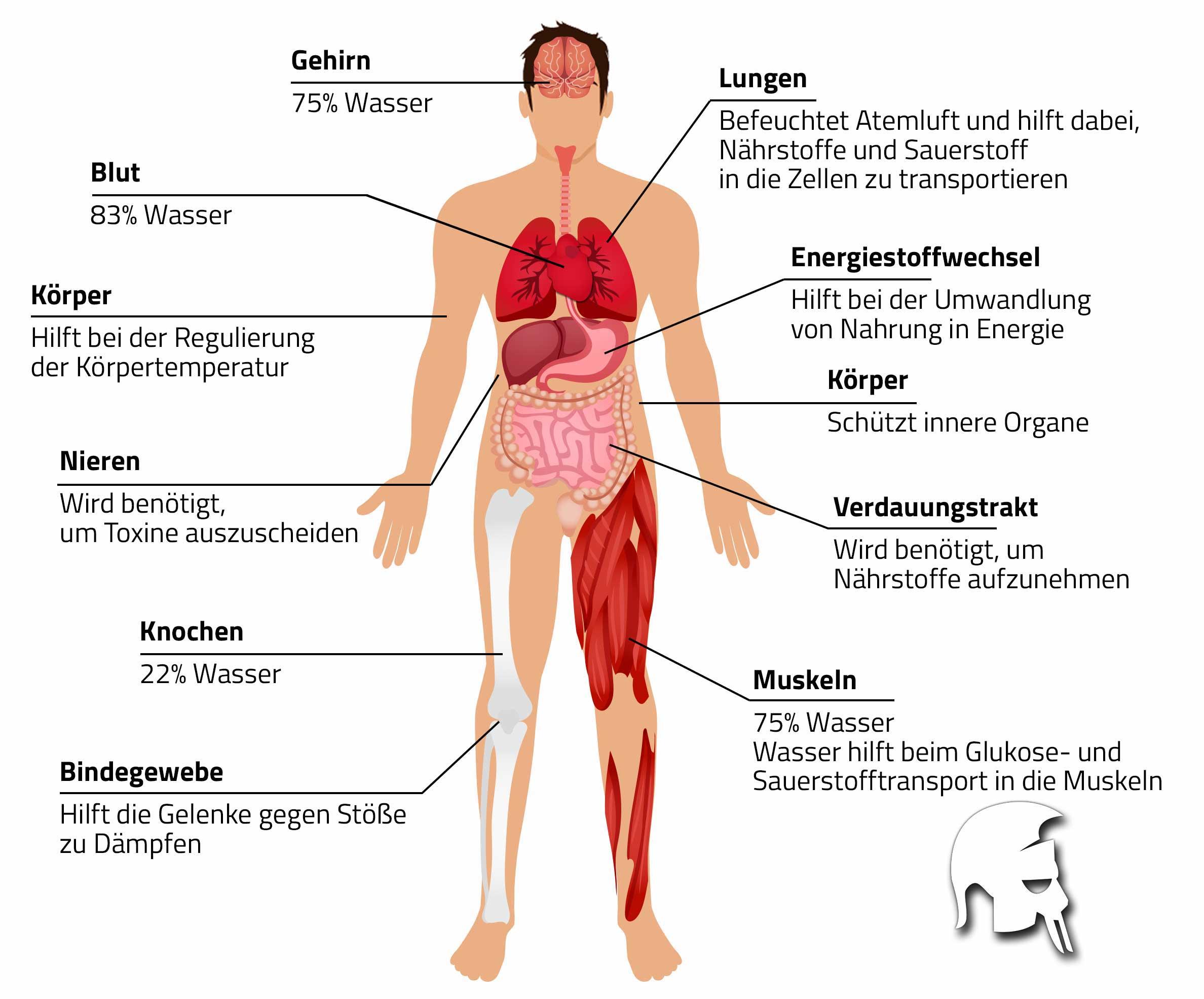 Gewichtsschwankungen Körperwasser